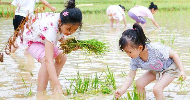 福建省农科院水稻科技开放日活动举行