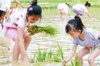 福建省農科院水稻科技開放日活動舉行