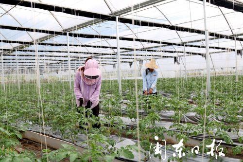 屏南:生態農業種植 助推鄉村振興