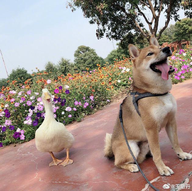 《【合盈国际官网】王珞丹寻鸭启事怎么回事 王珞丹寻鸭启事说了什么网友炸了》