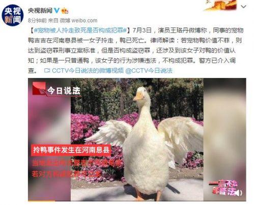 宠物被人拎走致死是否构成犯罪如何解读?王珞丹寻鸭事件最新进展