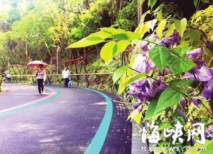 五彩梯田花海扮靓福州大腹山 2公里紫藤长廊市区最长